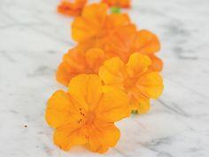 Orange Four O'Clock   Baker Creek Heirloom Seed Co