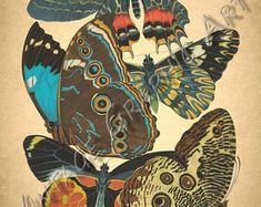 Motyle przez Seguy clip art Vintage Digital Download | Etsy Image Shows, Printable Wall Art, Background Images, Wall Art Prints, Decoupage, Card Making, Clip Art, Butterfly, Digital