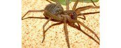Les 5 araignées les plus mortels | J'en reviens pas!