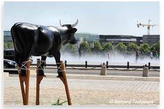 N°16 - La Vache Landaise - Place de la Bourse Artiste ITTURIA - Propriétaire SUD OUEST
