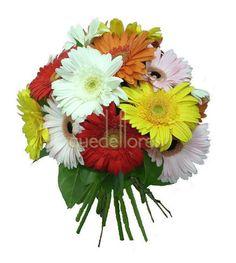 Producto de la semana en Quedeflores.com. Bouquet de gerberas multicolor desde 19'90 € #promoción #gerberas