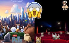 Hoy toca cine :D #TheSecretLifeOfPets #LaVidaSecretaDeTusMascotas #cine #petlover