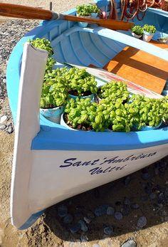 For your next Trip  Genova, Italy, basil for pesto sauce #liguria #essenzadiriviera