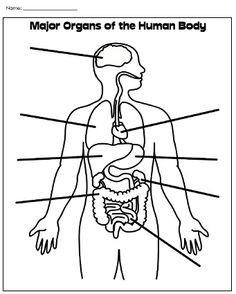 Human Body Parts Label | Label Human Body Worksheet