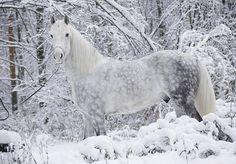 Lovely! (Photo courtesy of Wild and Wonderful)
