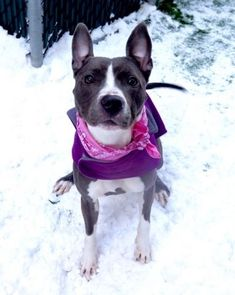 2/7/18 CHYNA – 17588 Safe - 1-11-2018 Manhattan  Rescue: Heaven Can Wait Rescue - NY