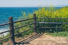 """Photograph of the vibrant """"super bloom"""" with yellow wildflowers blooming along the California coast. I took this picture on a warm afternoon; it features a rustic wood fence, wildflowers, clear skies and a crystal blue ocean. #nature #photography #superbloom #ocean #california #landscape #flowers #roadmapphotography"""