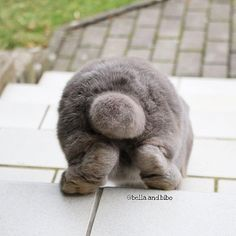 You aint seen everything until u seen a cotton tail wiggling up and down when bunnies get on the stairs