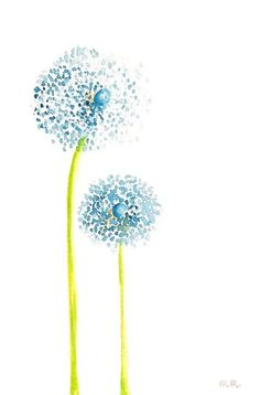 Fluffy blue alliums on tall green stems illustration