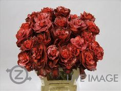 Today in the OZ Export webshop Specials: Brassica vrf Red + Glitter, 60 cm x 25 st. by Multi Color Flowers