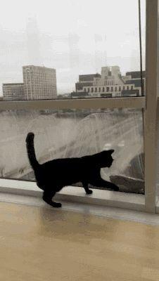 Hahahaha! Get that thing kitty!!
