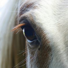 gosh i just love ya  http://www.murraymitchell.com/2012/01/close-up-of-a-horses-eye/