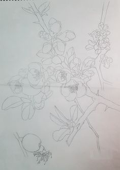 Pencil Drawings, Flowers, Art, Art Background, Florals, Kunst, Performing Arts, Flower, Blossoms