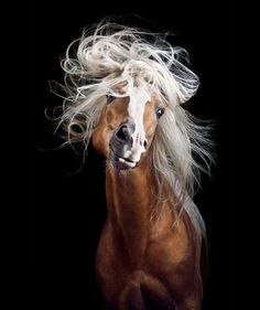 Instead Of Getting A Boring Office Job, I Followed My Dream To Become A Horse…