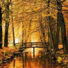 Golden Autumn bridge.