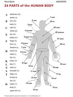 Body, English, Learning English, Vocabulary, ESL, English Phrases, http://www.allthingstopics.com/body.html
