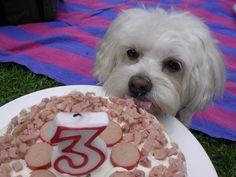 Dog Birthday Cake with recipe