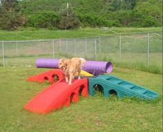 The Schaeff Dogs Need This Outside Play Equipment