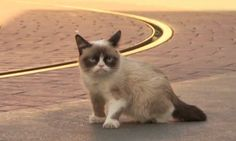 Grumpy Cat barfs RAINBOWS - CLICK ON IMAGE TWICE TO VIEW GIF