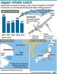 Whale Facts, Marine Biology, Hunting, Japan, Japanese, Fighter Jets