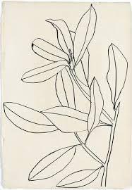 Afbeeldingsresultaat voor ellsworth kelly plant drawings