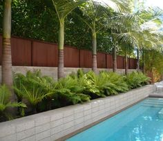 Wall beside pool with privacy fence and palm trees. Poolside California-style formality in Venice Beach.