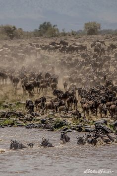 The ground beneath you shakes as over a million wildebeest cross the Mara River during the Serengeti migration, the largest mammal migration on earth. | #LiveYourAdventure