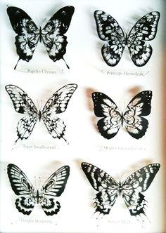 papercutting:six butterflies by masamisato