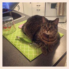 ...  #catonmydishmat #Chababa #cathaireverywhere #cat #catshenanigans