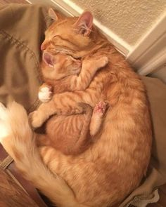 Click the Photo For More Adorable and Cute Cat Videos and Photos - Adorable Cats and Cute Kittens - Katzen Bilder Cute Cats And Kittens, I Love Cats, Kittens Cutest, Images Of Cute Kittens, Cute Baby Cats, Kittens Playing, Cute Images, Cute Little Animals, Cute Funny Animals