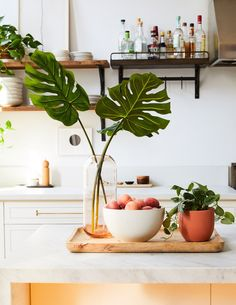 Take a more sustainable approach to always fresh florals with our trio of artificial Monstera fronds measuring at each. Pair them with your favorite vase for a more polished look – no water required. Indoor Gardening Supplies, Plants Delivered, Floor Plants, Low Light Plants, Faux Plants, Potted Plants, Monstera Deliciosa, Perfect Plants, Indoor Planters