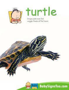 Teach your baby the sign for TURTLE with this printable poster. #BabySigns www.babysignstoo.com