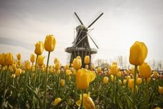 Holland Area Trip Guide | Midwest Living