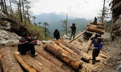 155 chinese nationals are imprisoned in Burma for illegal logging.