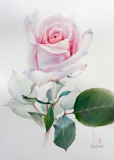 Watercolor without drawing by LaFe Watercolor Painting Techniques, Watercolor Paintings, Art Floral, Floral Design, Plant Drawing, Watercolor Rose, Botanical Art, Beautiful Paintings, Flower Art