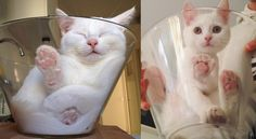 This Cat Has Unconditional Love for Her Glass Bowl