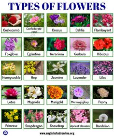 Types of Flowers: List of 50 Popular Flowers Names in English - English Study Online Orange Flower Names, Large Flowers, Beautiful Flowers, Potted Flowers, Seasonal Flowers, Flowers Name List, List Of Flower Names, Names Of Flowers, English English