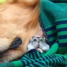 Φωτογραφίες για να «λιώσεις»: Μια αληθινή φιλία σκύλου με χάμστερ και παπαγαλάκια! [photos] | φωτογραφίες | petsonly.gr