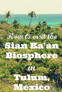 This #UNESCO World Heritage site is best known as home to 23 archaeological sites, 336 unique species of birdlife, and the most pristine beach on the Caribbean coast. Surprisingly, there is very little information available online. Here is everything you need to know to make a day trip to the Sian Ka'an Biosphere Reserve.