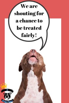 Pit bulls used to be the dog of the American family. Find out the truth about this awesome breed. the good the bad and the ugly truth about pit bulls