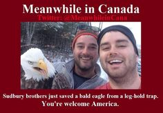 That eagle looks pissed. Canadian Memes, Canadian Things, I Am Canadian, Canada Funny, Canada Eh, Canadian Stereotypes, All About Canada, Meanwhile In Canada, Like You Quotes