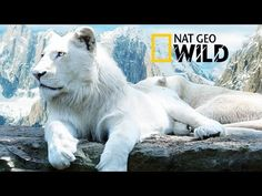 The Rare and Exotic Animals - National Geographic Documentary - YouTube