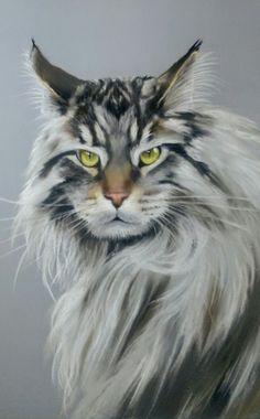 American Bob cat in pastel