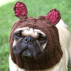 Dog Hat  Little Bear Hat by jessicalynneart on Etsy, $20.00