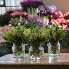 Happy weekend #mcqueens #flowers #florist #london #londonflorist #londonflowers #lilyofthevalley by mcqueensflowers