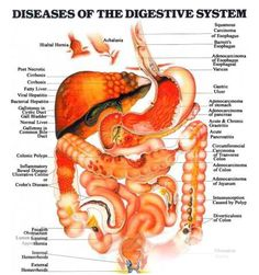 diseases-of-the-digestive-system