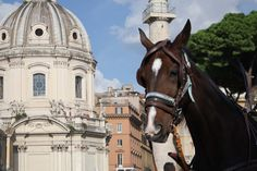 horse in Rome // Italy