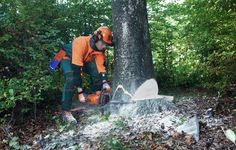 We have created a distinct niche for ourselves and provide excellent, safe and affordable tree felling service Pymble.