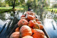 German farmer Harald Wenske travels on a barge full of pumpkins near the Spreewald village of Lehde, Germany-Seattle Times