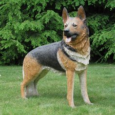 Honor one of the most loyal dog breeds known to man with this regal-looking German Shepherd statue made of fiberglass. Loyal Dog Breeds, Loyal Dogs, German Shepherd Facts, German Shepherd Puppies, German Shepherds, Life Size Statues, Dog Poses, Hiking Dogs, Real Dog